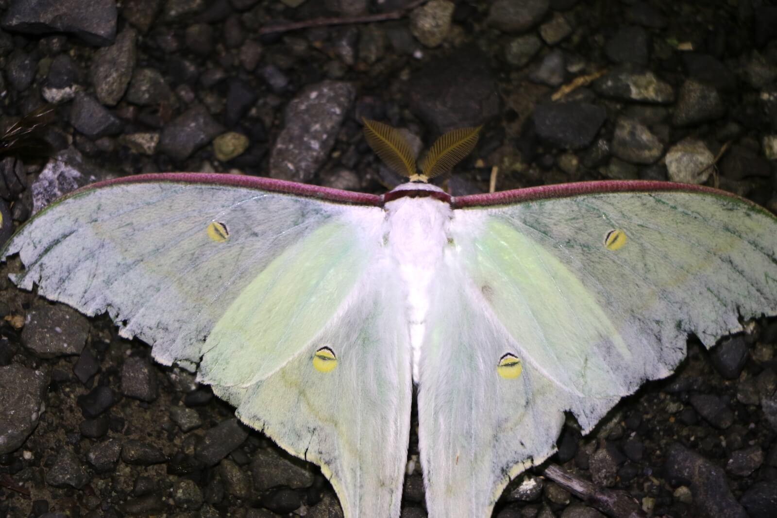 日本の蛾の種類・図鑑〜写真で同定しやすい