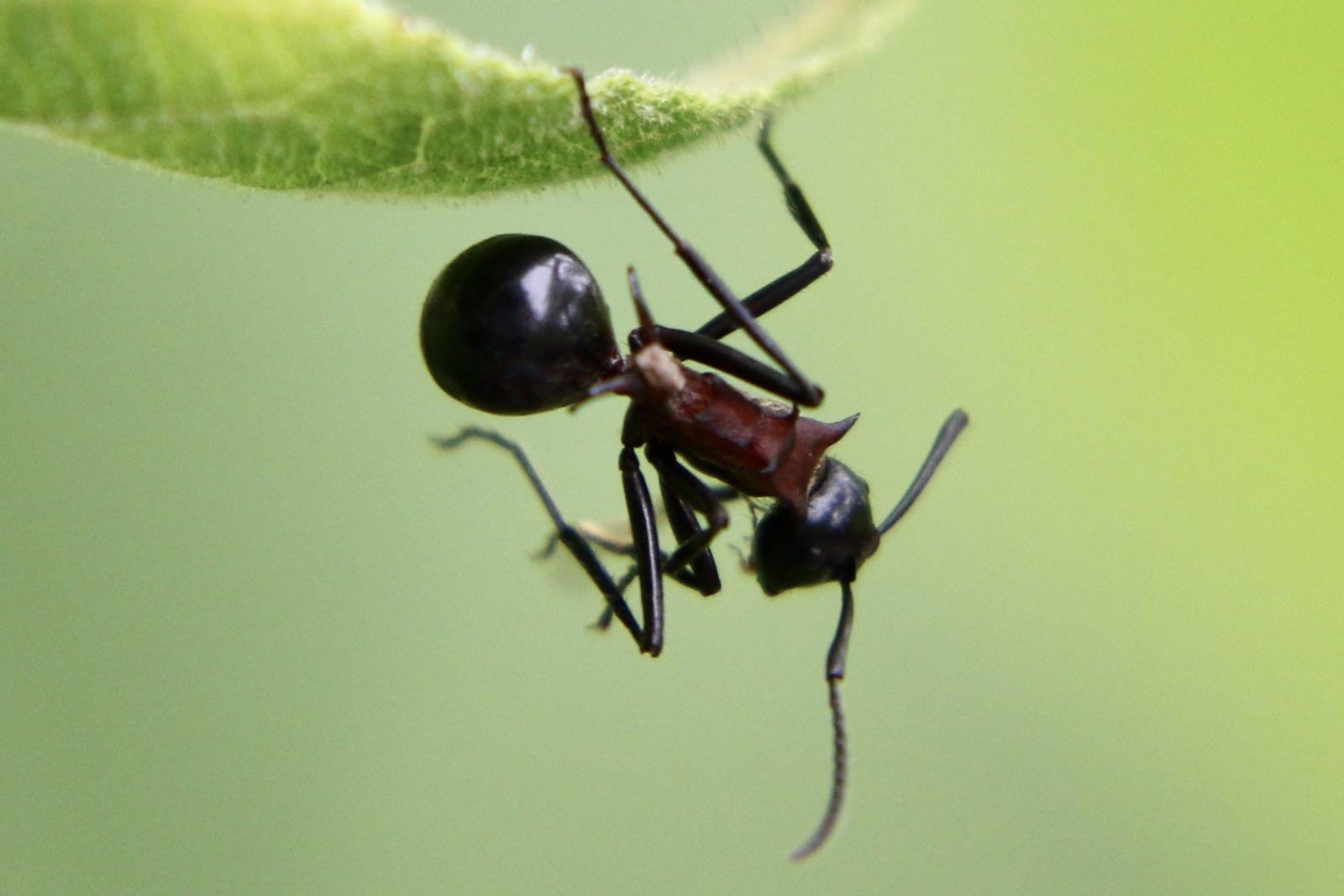 トゲアリ〜森に住む大きなアリは奪う側と奪われる側になった