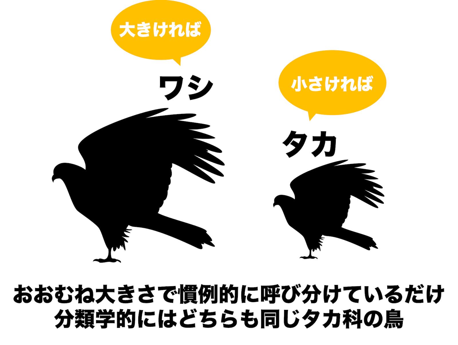 鷹と鷲の違い