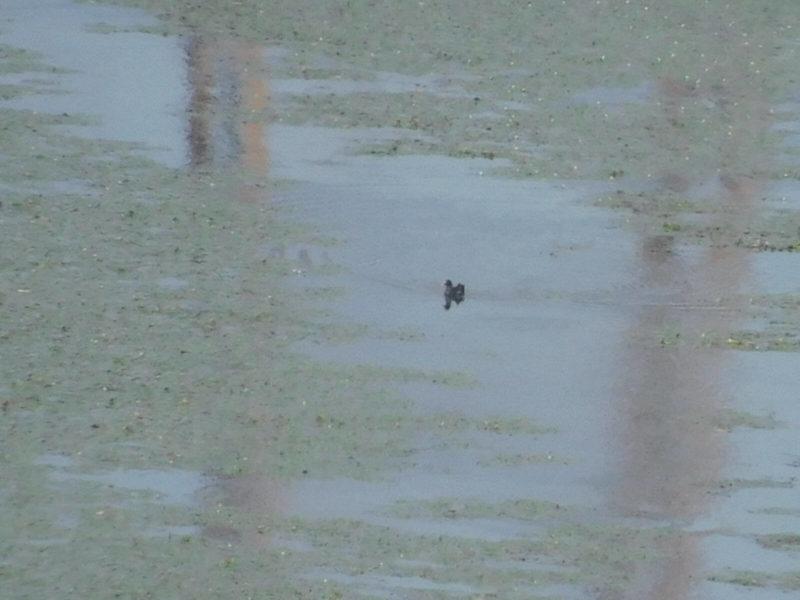諏訪湖のバン
