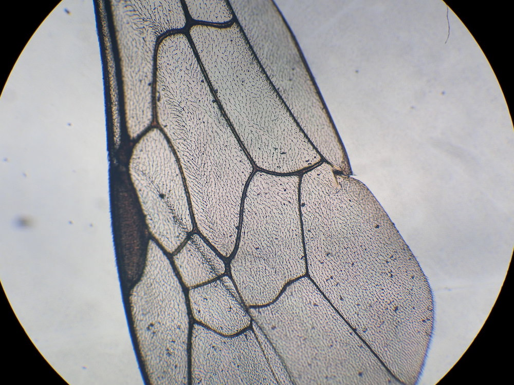 顕微鏡の観察方法〜手軽にきれいに観察する方法。小学生の自由研究に