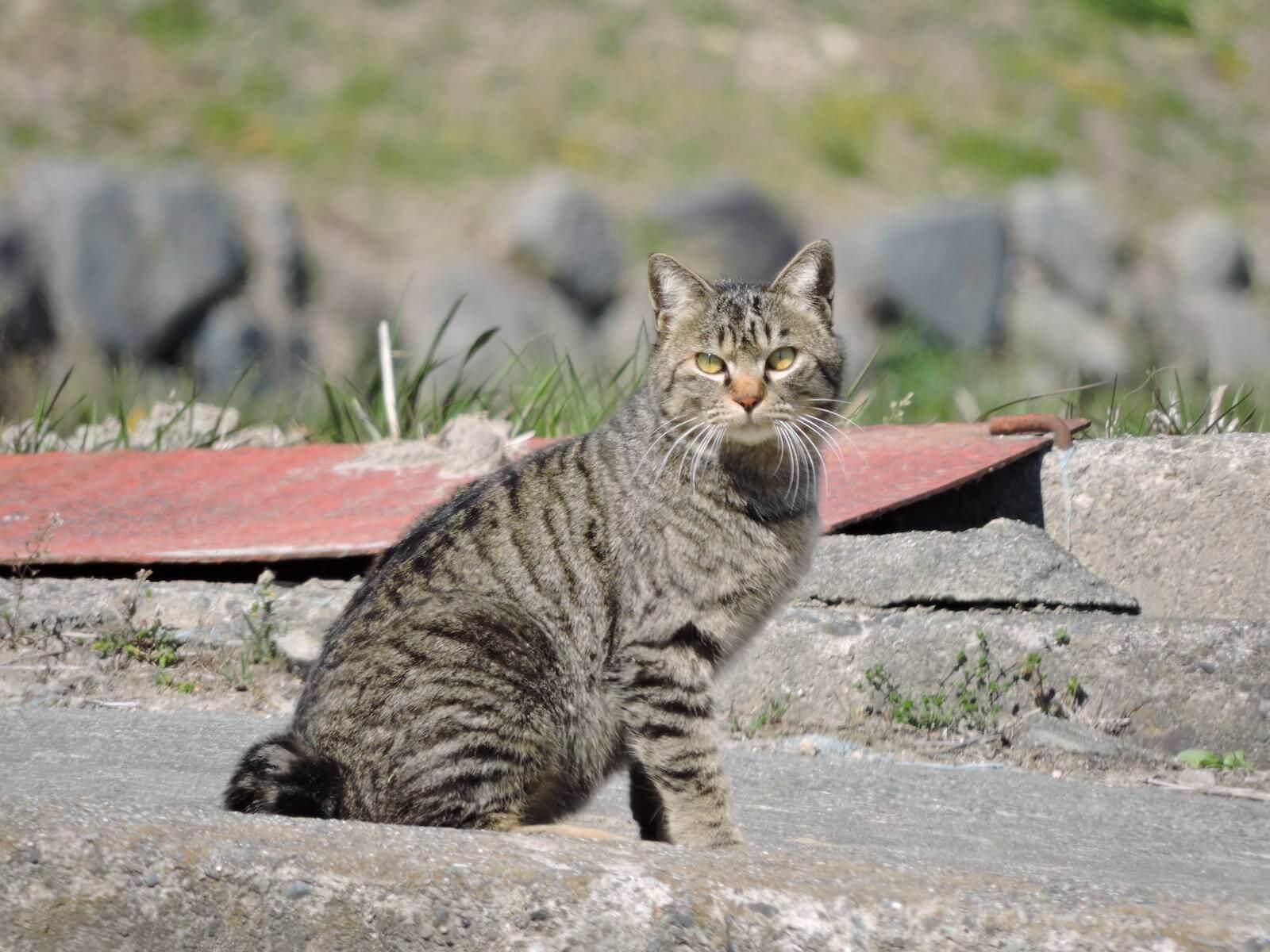 日本の猫の名称図鑑