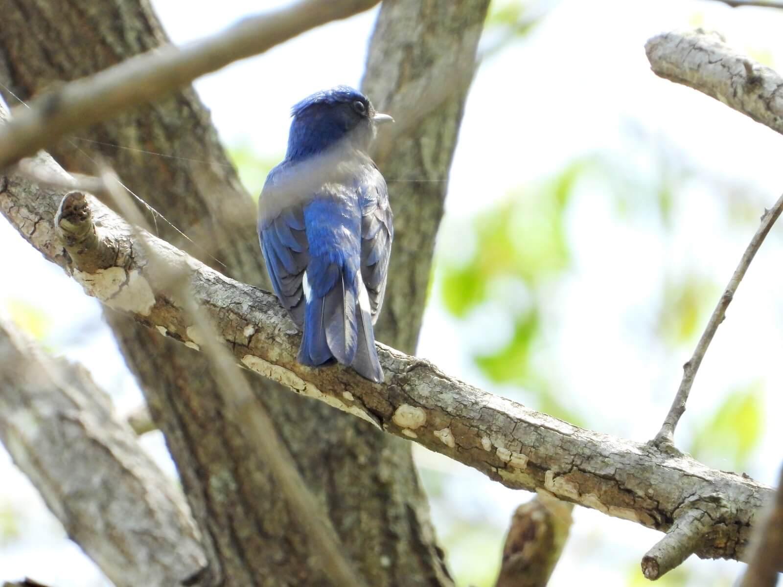 鳥 種類(鳥図鑑、野鳥図鑑)