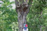 くぬぎ台木