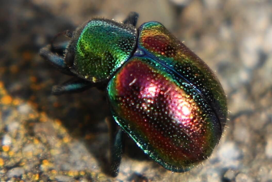 日本の美しい虫たち